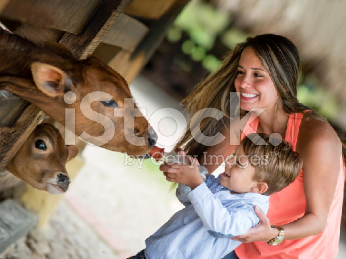 stock-photo-41542076-boy-feeding-a-cow.jpg