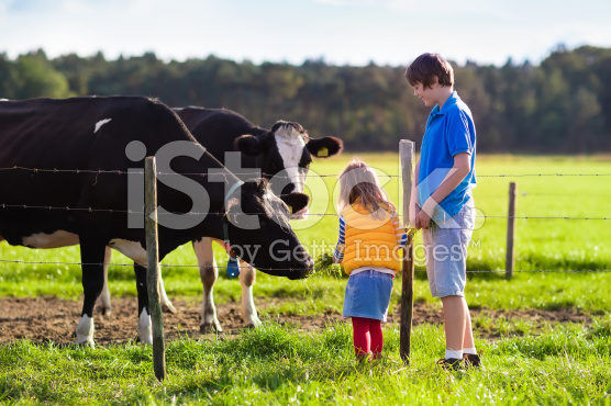 stock-photo-75221861-kids-feeding-cow-on-a-farm.jpg